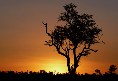 Afrika_by_Janine Grab-Bolliger _ Bearbeitung_ Joujou_pixelio.de